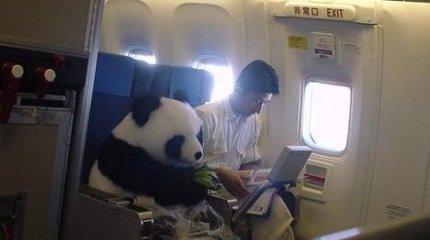 панда в самолёте