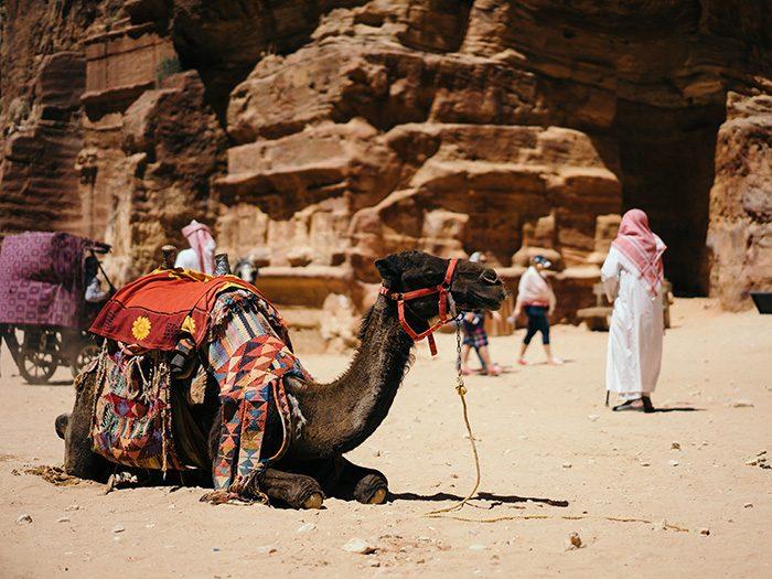 Верблюд, Иордания