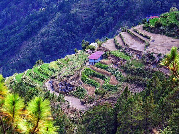 Поля-террасы на Филиппинах